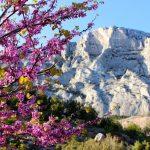 Гипнотическое очарование горы Сент-Виктуар
